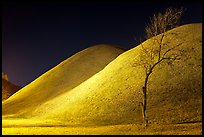 Tree and illuminated barrows at night. Gyeongju, South Korea (color)