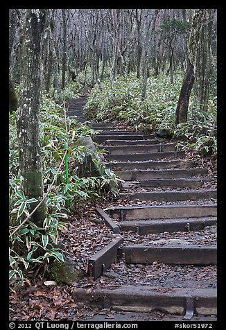 Steps of Eorimok trail, Hallasan National Park. Jeju Island, South Korea
