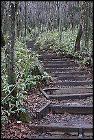 Steps of Eorimok trail, Hallasan National Park. Jeju Island, South Korea (color)