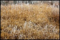 Frosted grasses, Hallasan National Park. Jeju Island, South Korea