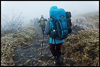 Backpackers on trail in fog, Hallasan. Jeju Island, South Korea