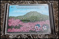 Frosted sign depicting spring landscape, Hallasan. Jeju Island, South Korea