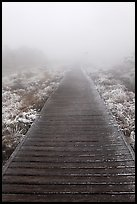 Boardwalk and fog, Eorimok trail, Mount Halla. Jeju Island, South Korea (color)