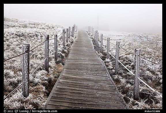 Boardwalk trail in frozen landscape, Hallasan. Jeju Island, South Korea