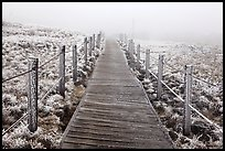 Boardwalk trail in frozen landscape, Hallasan. Jeju Island, South Korea (color)