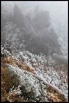 Frozen grasses and pinnacles in fog, Hallasan. Jeju Island, South Korea