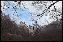 Pinnacles and bare branches, Mt Halla. Jeju Island, South Korea ( color)