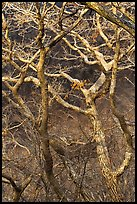 Bare branches, Hallasan National Park. Jeju Island, South Korea