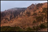 Forest and pinnacles, Hallasan National Park. Jeju Island, South Korea (color)