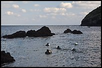Haeneyo women swimming in cove. Jeju Island, South Korea