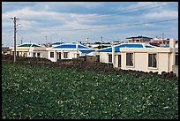 Houses with blue roofs, Seongsang Ilchulbong. Jeju Island, South Korea ( color)