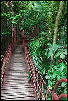 Suspended boardwalk, forest reserve. Kuala Lumpur, Malaysia ( color)