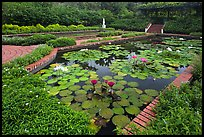Pond with water lillies, Singapore Botanical Gardens. Singapore (color)