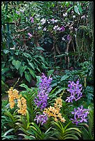 National Orchid Garden, in Singapore Botanical Gardens. Singapore ( color)