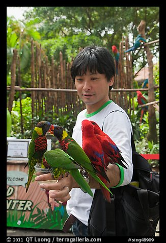 Man holding many parakeets on arm, Sentosa Island. Singapore (color)
