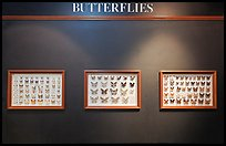 Butterfly exhibit, Sentosa Island. Singapore (color)