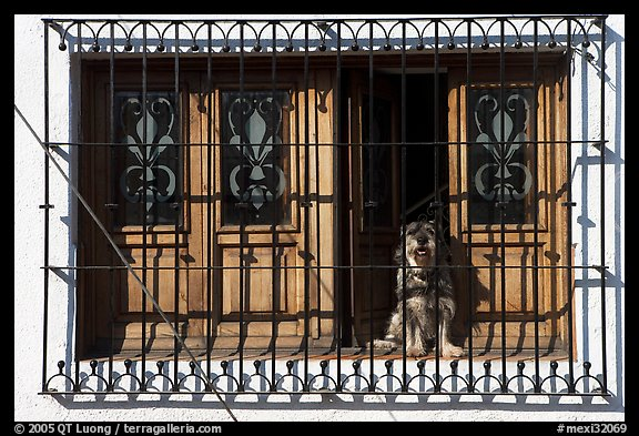 Window with forged metal grid and dog, Tlaquepaque. Jalisco, Mexico (color)