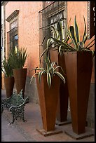 Pots with agaves for sale outside a gallery, Tlaquepaque. Jalisco, Mexico (color)