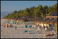 Beach front with sun shades and palm trees, Nuevo Vallarta, Nayarit. Jalisco, Mexico
