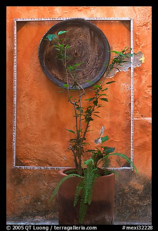 Potted plant and decorative platter on a wall, Puerto Vallarta, Jalisco. Jalisco, Mexico (color)