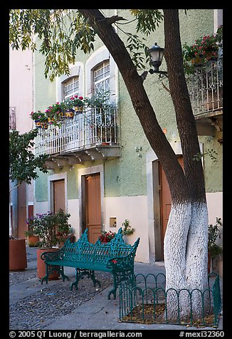 Tree, publich bench, and house on Plazuela San Fernando. Guanajuato, Mexico (color)