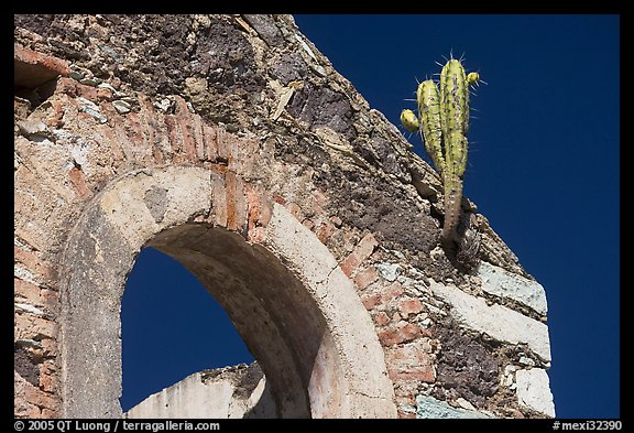 Cactus growing out of ruined house. Guanajuato, Mexico (color)