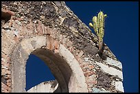 Cactus growing out of ruined house. Guanajuato, Mexico