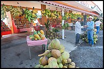 Roadside fruit stand. Mexico (color)