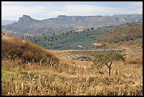 Rural landscape with grasses and agave field. Mexico