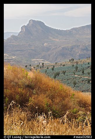 Grasses, agaves, and mountains. Mexico (color)