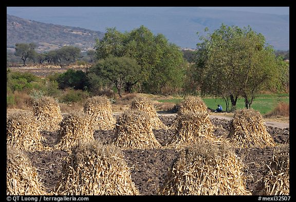 Stacks of corn hulls. Mexico (color)