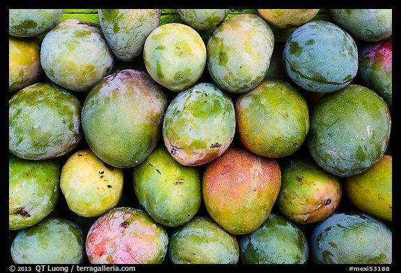 mango fruit california state fruit