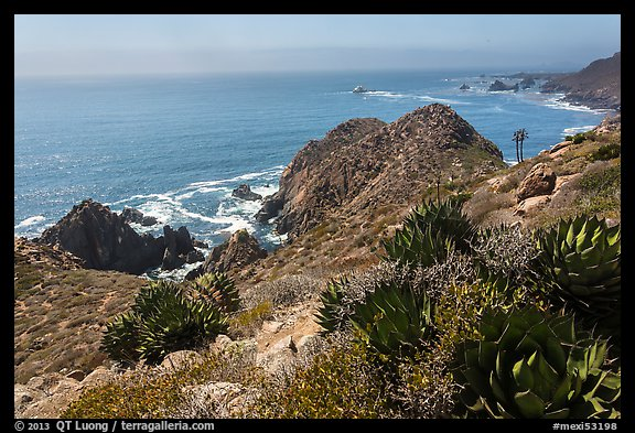 Succulent plants and Pacific coastline. Baja California, Mexico (color)