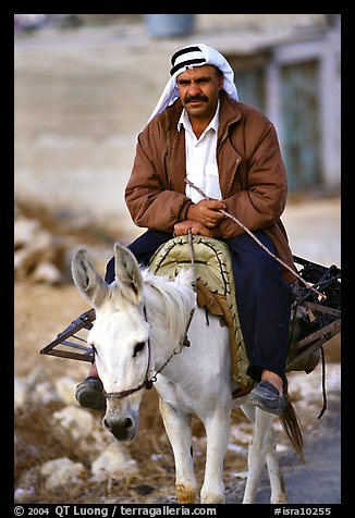 Arab man riding a donkey, Hebron. West Bank, Occupied Territories (Israel)