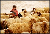 Bedouin girl feeding water to a hard of sheep, Judean Desert. West Bank, Occupied Territories (Israel)