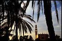 Palm tree and tower, Jaffa, Tel-Aviv. Israel