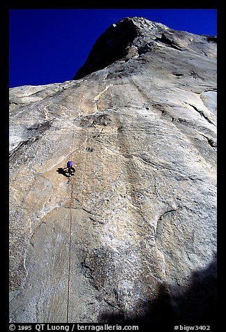 Jugging back to Sickle. Only 34 pitches to go !. El Capitan, Yosemite, California (color)