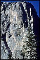 The first part of the route (common with the Triple direct) is reminiscent of the Nose : free climbing and clean aid. The harder aid begins on the traverse just below the Shield, which is the convex part left of the Nose. El Capitan, Yosemite, California
