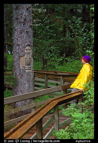 Hiker looking at a tree carved by native Tlingit indians, Bartlett Cove. Glacier Bay National Park, Alaska