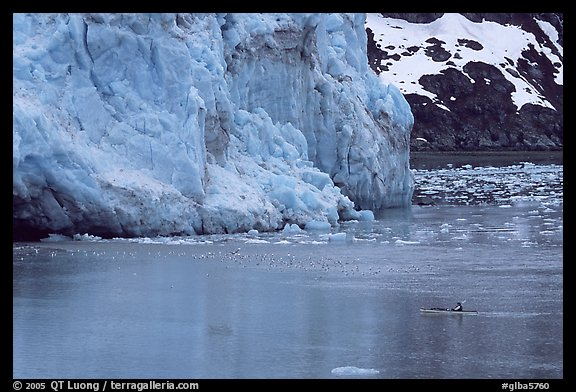 Kayaker dwarfed by the front of Lamplugh Glacier. Glacier Bay National Park, Alaska (color)