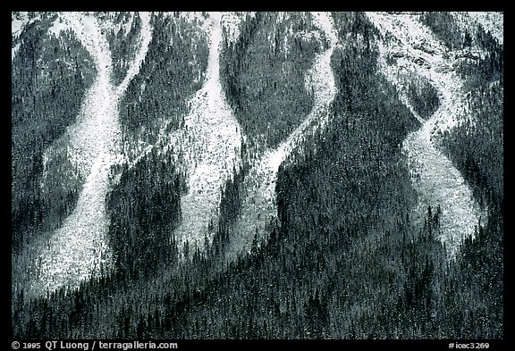 Avalanche gullies. Canada (color)