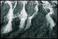 Avalanche gullies. Canadian Rockies
