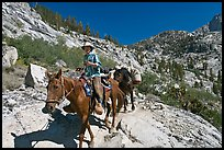 Man driving a pack of horses on trail, lower Dusy Basin. Kings Canyon National Park, California