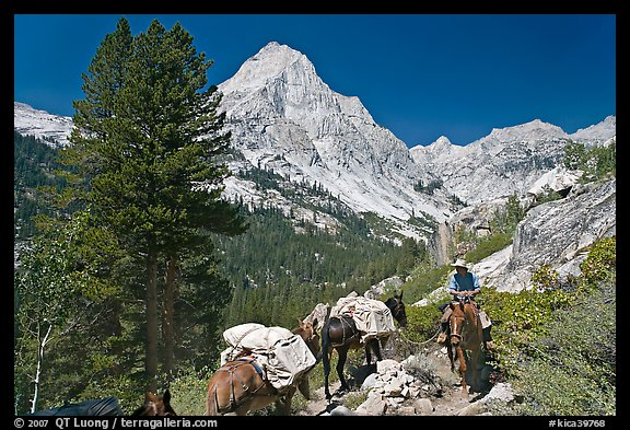 Man riding horse and Langille Peak, Le Conte Canyon. Kings Canyon National Park, California (color)