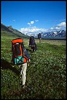 Backpackers with heavy packs. Lake Clark National Park, Alaska (color)