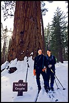 Skiers in front of the tree named Faithful couple tree in winter. Yosemite National Park, California (color)