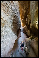 Canyonneer using rope to descend into narrows, Mystery Canyon. Zion National Park ( color)