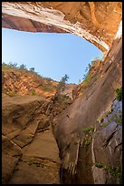 Canyoneer rappels in Mystery Springs alcove, Mystery Canyon. Zion National Park, Utah ( color)
