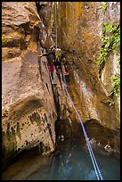 Canyoneer rappels above water pool, Mystery Canyon. Zion National Park, Utah ( color)