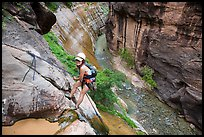 Woman rappels into the Virgin River Narrows. Zion National Park, Utah ( color)